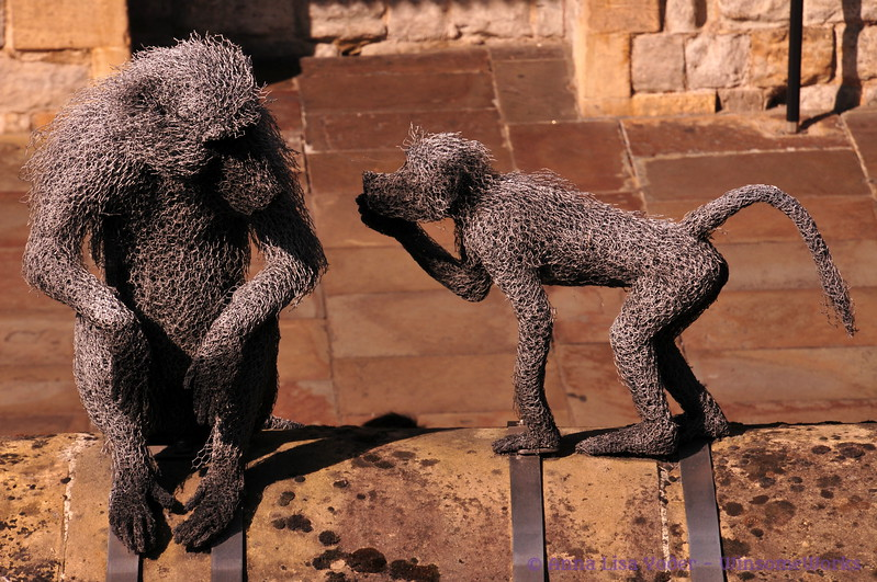 """Baboons at Tower of London (part of the """"Royal Beasts"""" exhibit)"""