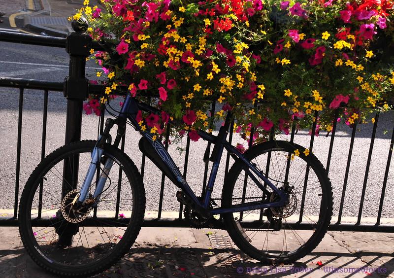 Bike parked under flower basket - Creek Rd., Greenwich