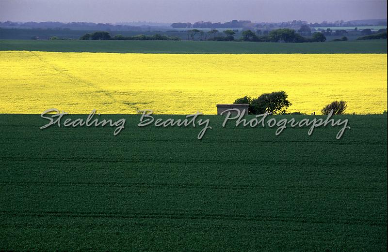 Rape Fields near Dover