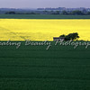 Rape Fields near Dover