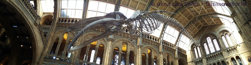 Ichthyosaurus in Museum of Natural History