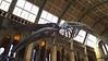 Ichthyosaurus  -  Dinosaur hall of the Natural History Museum