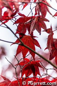 2013-10-08__MG_4582