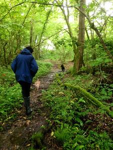 A walk through a turbary