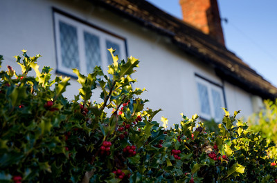Holly and cottage Aspley Guise