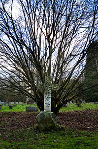 Head stone in front on tree