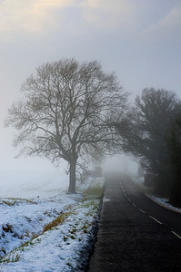 Tree in the mist after snow fall