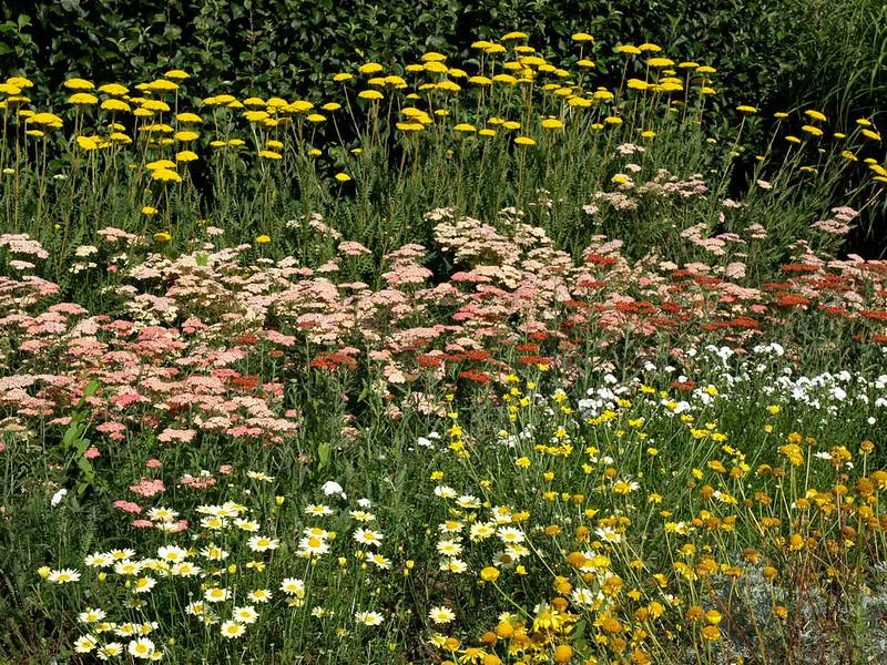 OEng Waterperry Gardens 14 copy
