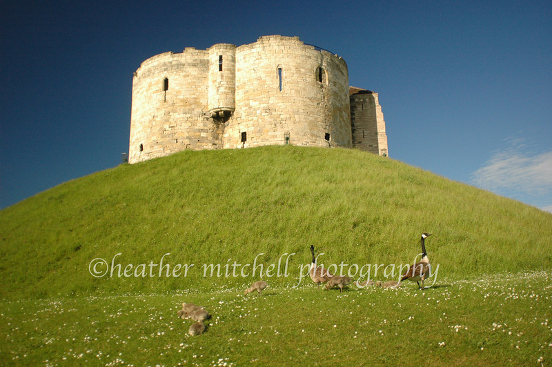"Clifford's Tower, York  <form target=""paypal"" action=""https://www.paypal.com/cgi-bin/webscr"" method=""post""> <input type=""hidden"" name=""cmd"" value=""_s-xclick""> <input type=""hidden"" name=""hosted_button_id"" value=""2791076""> <table> <tr><td><input type=""hidden"" name=""on0"" value=""Sizes"">Sizes</td></tr><tr><td><select name=""os0""> 	<option value=""Matted 5x7"">Matted 5x7 $20.00 	<option value=""Matted 8x10"">Matted 8x10 $40.00 	<option value=""Matted 11x14"">Matted 11x14 $50.00 </select> </td></tr> </table> <input type=""hidden"" name=""currency_code"" value=""USD""> <input type=""image"" src=""https://www.paypal.com/en_US/i/btn/btn_cart_SM.gif"" border=""0"" name=""submit"" alt=""""> <img alt="""" border=""0"" src=""https://www.paypal.com/en_US/i/scr/pixel.gif"" width=""1"" height=""1""> </form>"