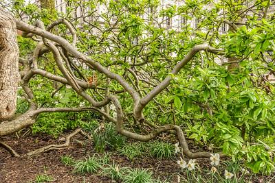 A unique tree at St. James Park.