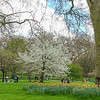 """A lovely Spring day at St. James park.<br><br>  St James's Park is a 23-hectare (57-acre) park in the City of Westminster, central London. The park lies at the southernmost tip of the St James's area, which was named after a leper hospital dedicated to St James the Less. The park is the most easterly of a near-continuous chain of parks that comprises (moving westward) Green Park, Hyde Park, and Kensington Gardens.[1][2][3]  The park is bounded by Buckingham Palace to the west, the Mall to the north, Horse Guards to the east, and Birdcage Walk to the south. It meets Green Park at Queen's Gardens with the Victoria Memorial at its centre, opposite the entrance to Buckingham Palace. St James's Palace is on the opposite side of The Mall. The closest London Underground stations are St James's Park, Green Park, Victoria, and Westminster. (<a href=""""https://en.wikipedia.org/wiki/St_James%27s_Park"""">Wikipedia</a>)"""