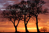 ENG-Sandy Lane sunset, NORTHS-IMG_1335