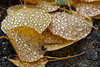 Rain drops on leaves