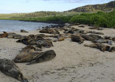 Santa Fe sea lions