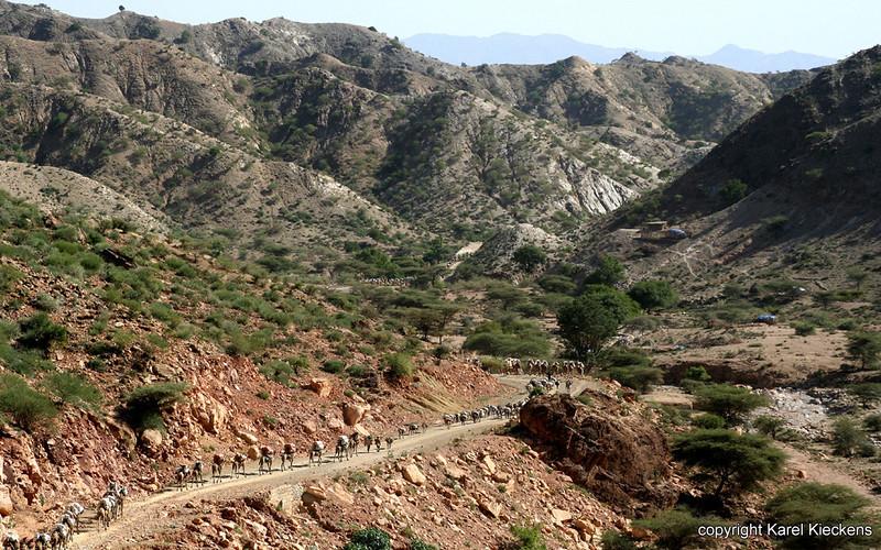 01 Karavanen dalen af van Tigray hoogplateau