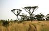Mago national park parque nacional sabana savanna savane landscape paysage paisaje etiopia ethiopia ethiopie