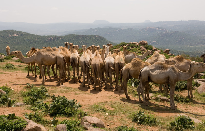 Ethiopia -514