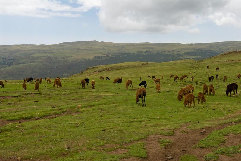 Ethiopia -58