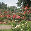 Nels photos Owen Rose Garden