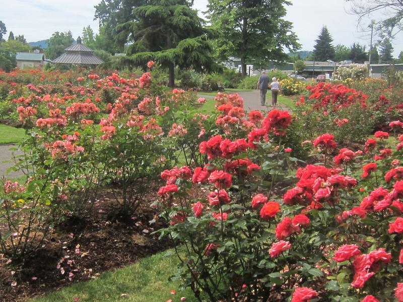 Owen Rose Garden along South Bank of the Willamette River Trail