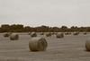 Hay bales in Hungary; bread basket of Eastern Europe