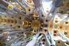 Ceiling of La Segrada Familia, Antoni Gaudi Architect