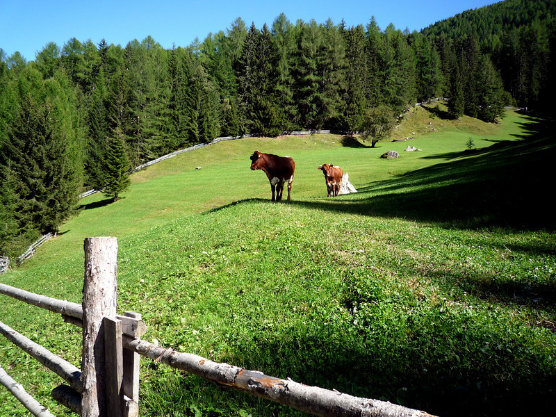 A pair of friendly and curious cows greeted us on our way down...