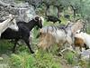 I also found some goats