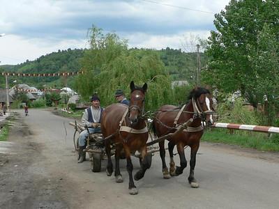 Horse drawn transport in in Maramures