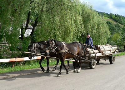 Bringing home the wood in Maramures