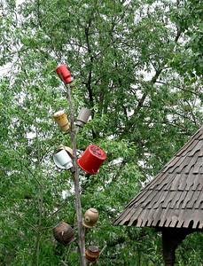 Pot tree, Bucovina