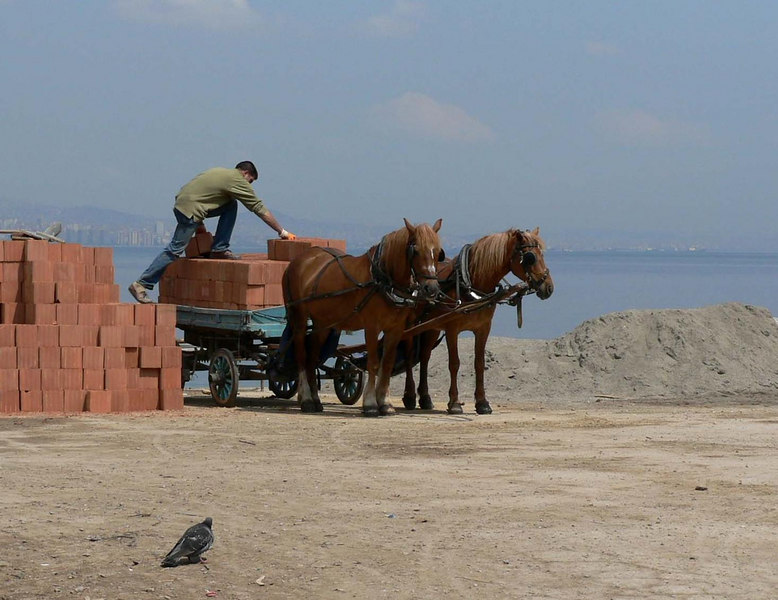 No cars on Heybeliada Island, so horses are used for transport