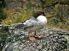 Bird in the Alpine Zoo