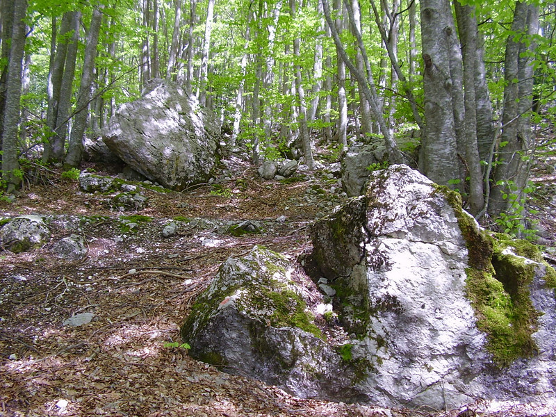 The forest of the Valle Fiorita.