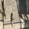 Kitties with Shadows - Dubrovnik, Croatia