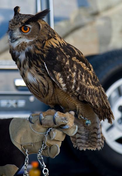 owl outside ancient city of Mdina Malta