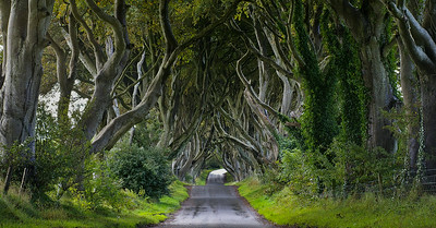 Dark Hedges, Bregagh Road