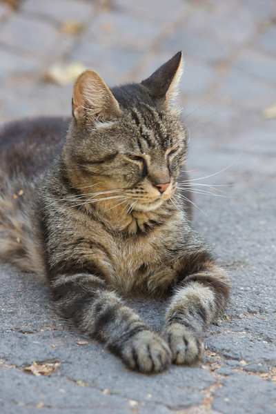One of the thousands of feral cats around the Roman Forum...  Cutie!