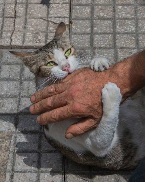 The storekeeper and his feisty cat, Messina, Sicily.