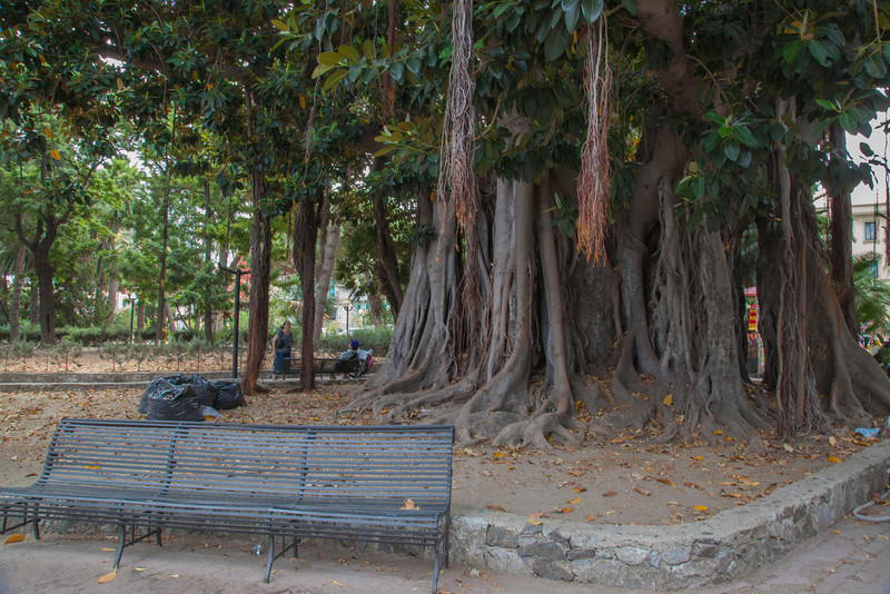 We wandered across this fabulous banyan tree in Messina, Sicily.