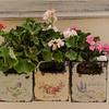 Nafplion - window flower box