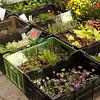 Vegetable Market, Pisek