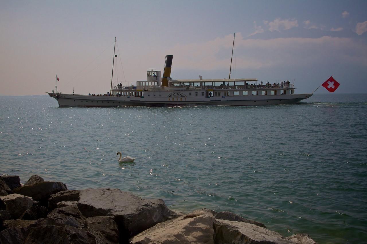 Swan and boat near Vevey