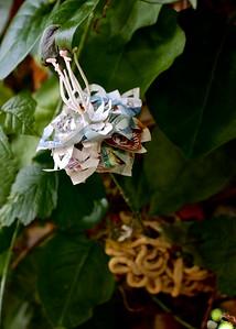 Fake flower made of money