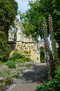 View of the Abbey ruins thru foliage.