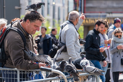 Man feeding pigeons in Amsterdam.