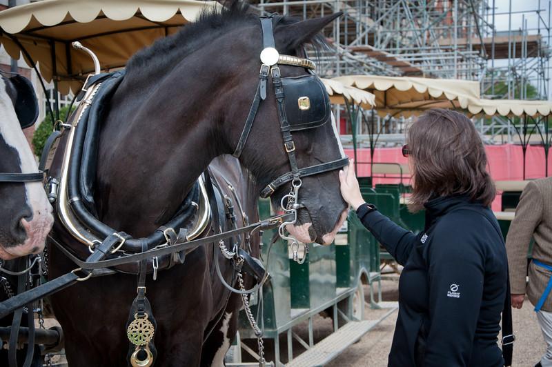 Sasha petting the horeses in the Hampton Court Palace.