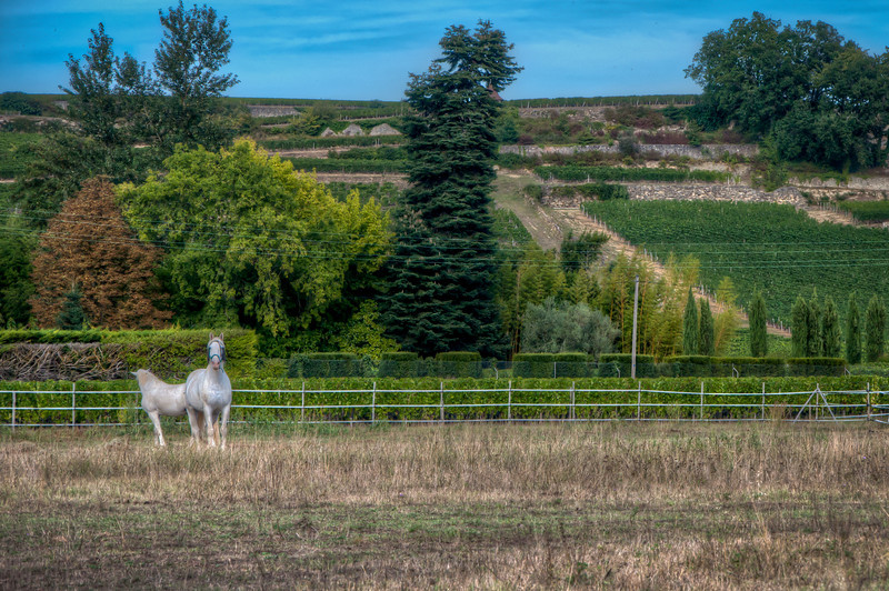 On our way out of St. Emilion, we walked to the train station and got some great views of the vineyards and country-side. After passing this field of horses, I ran back to get a few pictures.