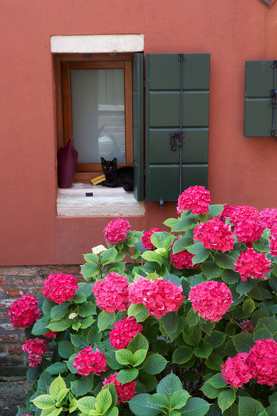 This is a pretty classic composition - cat in window, next to flowers.