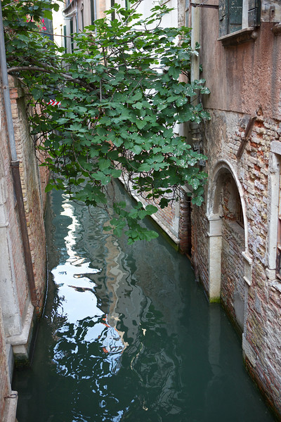 Narrower canals had plants growing all the way across.